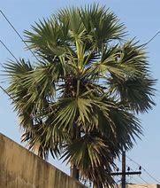 palm tree removal north Brisbane