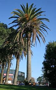 palm tree removal price Perth